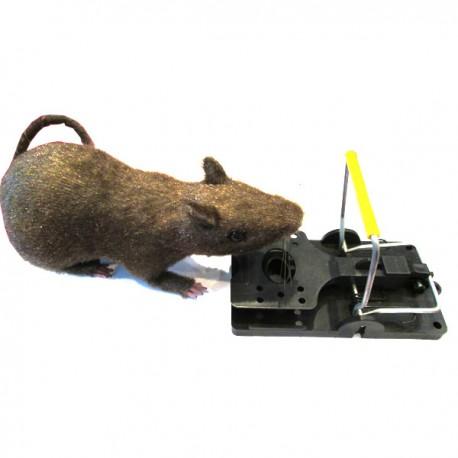 ANTI RATS TAPETTE